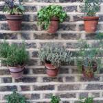 20150627_174932.jpg Jacqui Vertical Herb Garden - Portrait. (576x1024)