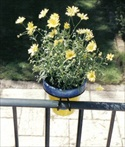 Balcony Rings with blue + yellow pot.jpg RESIZE